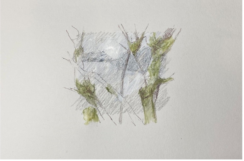 A sketch of green lichen on branches with a shaded pencil background